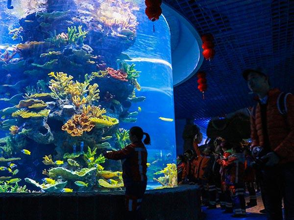 珊瑚礁鱼区