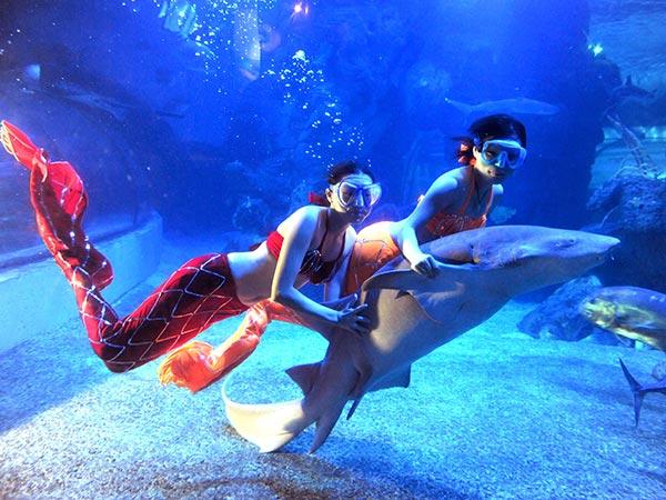 两位美人鱼姑娘在海底和鲨鱼一起畅游
