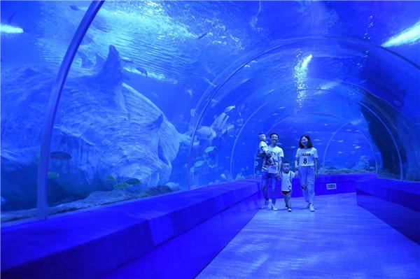 凶猛鲨鱼区